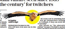 ??  ?? An Egyptian vulture in flight