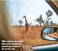 ?? wildlifeletters@immediate.co.uk ?? With safaris cancelled, due to the pandemic, poaching seems to be on the rise.