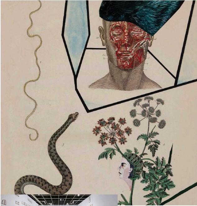 ??  ?? ↑ Anju Dodiya, The Serpent and the Spy.