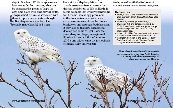 ??  ?? Most of north-west Europe's Snowy Owls are presumed to arrive from North America – a theory backed up by stowaways on ships from across the Atlantic.