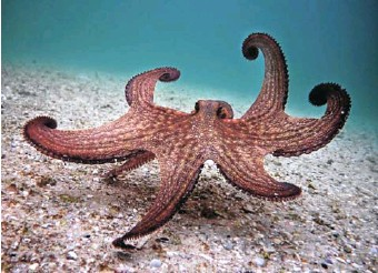 ?? PICTURE: NETFLIX ?? The silent star of 'My Octopus Teacher'