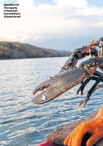 ??  ?? SNAPPED UP: The majority of Scotland's best shellfish is shipped abroad