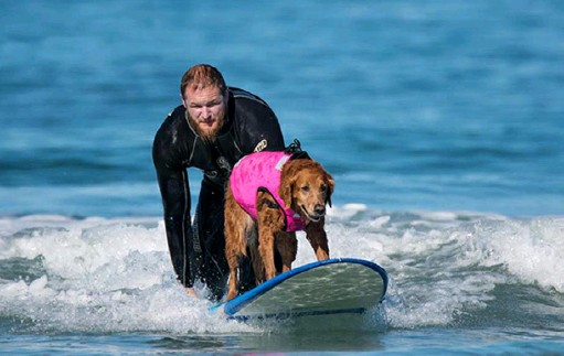 ?? Judy Fridono photos ?? Surf Dog Ricochet's special brand of therapy is surfing with people with special needs — including children and military veterans. With California beaches all closed, owner/trainer Judy Fridono is offering virtual visits from Ricochet, 12, a golden retriever.