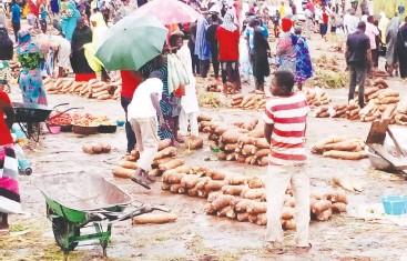 ?? Photo Magaji Isa Hunkuyi. ?? Hawan Mika yam markets in Yorro Local Government Area of Taraba State