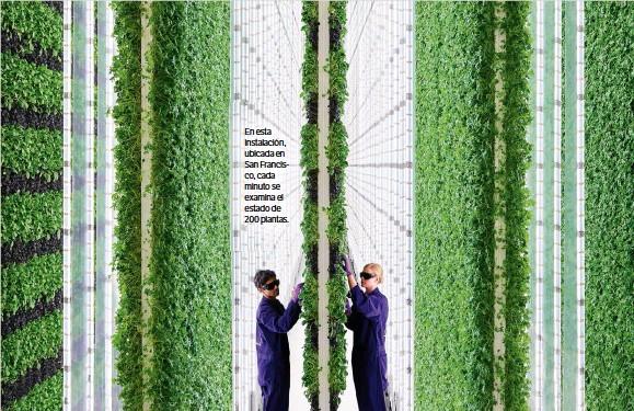 ??  ?? En esta instalación, ubicada en San Francisco, cada minuto se examina el estado de 200 plantas.