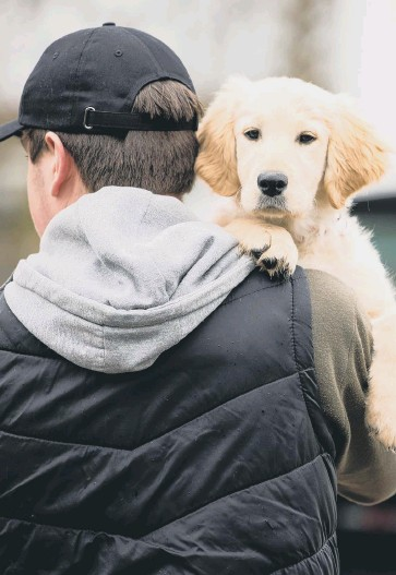 ?? FILE PICTURES: SHUTTERSTOCK ?? People have been warned to take precautions to help protect their pets from thieves