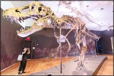 ??  ?? Stan, one of the largest and most complete Tyrannosaurus rex fossil discov ered, is on display on Sept 15, at Christie's in New York. (AP)