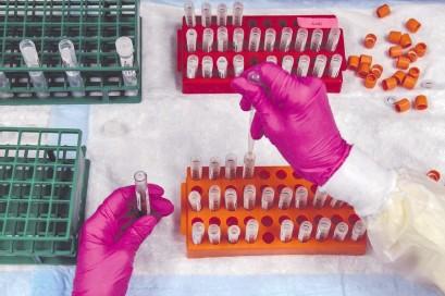 ??  ?? Existe una media docena de proyectos de vacuna más avanzados, que se encuentran en etapas de pruebas clínicas. La OMS calcula que la campaña de vacunación masiva podrían llevarse a cabo a mediados del año que viene.