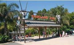 ??  ?? V živalskem vrtu v Oaklandu so doslej cepili tigre, medvede, pume in dihurje.