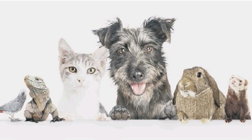 ??  ?? Enter your best photo to our competition to be in with a chance of wnning a £50 voucher from Pets at Home