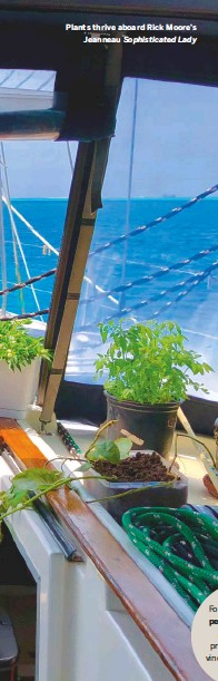 ??  ?? Plants thrive aboard Rick Moore's Jeanneau Sophisticated Lady