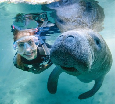 ??  ?? SWIM WITH MANATEES • DISCOVER CRYSTAL RIVER