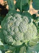 ??  ?? Broccoli.