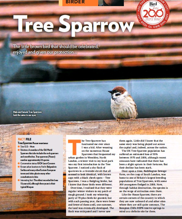 ??  ?? Male and female Tree Sparrows look the same to our eyes