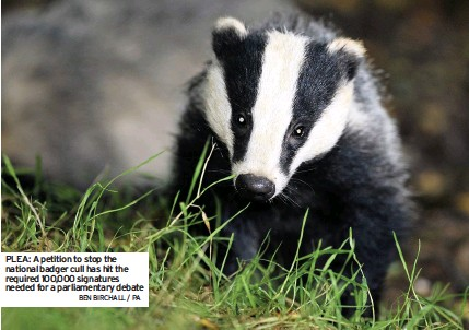 ?? BEN BIRCHALL / PA ?? PLEA: A petition to stop the national badger cull has hit the required 100,000 signatures needed for a parliamentary debate