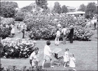 ??  ?? Sweeping view of Te Awamutu Rose Garden at the 40th anniversary in 2009.