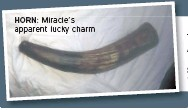 ??  ?? HORN: Miracle's apparent lucky charm