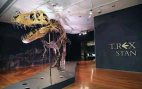 ?? FOTO AFP ?? Het vorige recordbedrag voor een T-Rex lag op 7 miljoen euro.