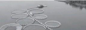 ??  ?? Аквакультура в открытом водоёме может нанести вред экологии.