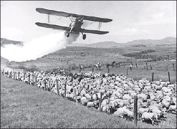 ?? Associated Press ?? DDT is sprayed over a flock of sheep in Oregon in 1948. New research has found that the granddaughters of women who were exposed to the chemical during pregnancy can suffer serious health effects.