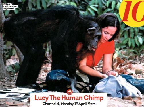 "??  ?? Chimp: ""I can't take you anywhere"""
