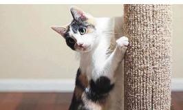 ??  ?? Ein Kratzbaum hilft den Hauskatzen, ihre Krallen abzuwetzen