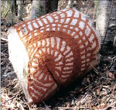?? PICTURE: GAIL SCOTT WILSON ?? South African artist Erynne Ewart-Phipps embroidered a pattern with red earth on to a rock at the Silver Hills at the Crocodile River Reserve in Centurion, Gauteng.