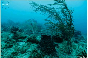 "??  ?? Above: A seascape in ""Ba­jos del Norte"" with very low fish abun­dance and higher al­gae cover, a sign of lower reef eco­log­i­cal health.