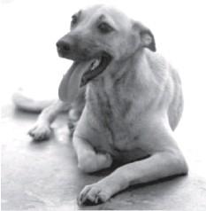 ??  ?? Wennie waits for adoption at IRO.