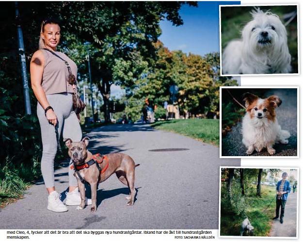 """?? FOTO: SACHARIAS KÄLLDÉN FOTO: SACHARIAS KÄLLDÉN FOTO: SACHARIAS KÄLLDÉN FOTO: SACHARIAS KÄLLDÉN ?? Båtsman, 7, med husse Mats Lindemark, 65, Hud dinge: """"Båtsman brukar inte vara i hundrastgården. Det kan vara en del större hundar där som hoppar på mindre. Men det är jättebra att det byggs hundrastgårdar. Det är det enda stället där hundar kan vara okopplade. Floran 11, med husse Ove Georgsson, 70, Huddinge: """"Det är bra att de ska bygga hundrastgårdar, tycker husse. Men vi använder den inte, Floran har inte något behov av det."""" Chase, 11, med husse Peter Wiklund 67: """" Även om vi inte själva besöker hundrastgården är det jättebra att det byggs flera nya."""