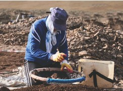 ??  ?? ABOVE In Mongolia, the tens of thousands of workers employed in small-scale gold mining are potentially exposed to mercury poisoning