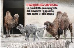 ??  ?? E PASQUALINA SORVEGLIA La cucciolotta accompagnata dalla mamma Pasqualina, nata anche lei al Bioparco.