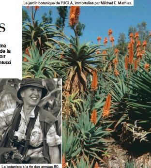??  ?? Le jardin botanique de l'UCLA, immortalisé par Mildred E. Mathias.