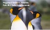 ??  ?? Pinguine in Sailsbury, Antarktis. Foto: © J. Seifert/Intertourist.de