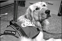 ??  ?? Dariel Nunez's new service dog, Kluck, lays at St. Joseph's Center for Special Learning.