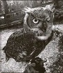 ?? Clearwater Audubon Society ?? If you think you see or hear Squeaky the owl, contact the Clearwater Audubon Society at (727) 798-2385.