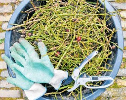 ??  ?? Get all rose pruning done before the end of July.