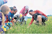 ??  ?? i Plantlife's Dr Trevor Dines shows members of North Wales Meadows Group his Coronation Meadow near Conwy in north Wales