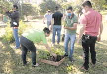 ??  ?? Los primeros plantines fueron cultivados en la plaza San Lorenzo del barrio Ciudad Nueva de la capital departamental.