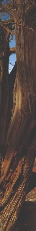 ??  ?? LA NAZIONE DEI NAVAJO Monument Valley, a destra, alla frontiera tra i territori di Utah e Arizona, faceva parte delle vaste terre in cui risiedevano gli indiani navajo.