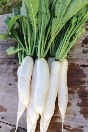 ??  ?? This is Mt. Data radish, a favorite of a champion grower in Laguna.