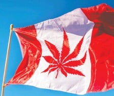 ?? CHRIS ROUSSAKIS/AFP/ GETTY IMAGES ?? The ability to list on Canadian and U.S. markets like Nasdaq is a compelling reason some marijuana production entities are choosing to base themselves in Canada.