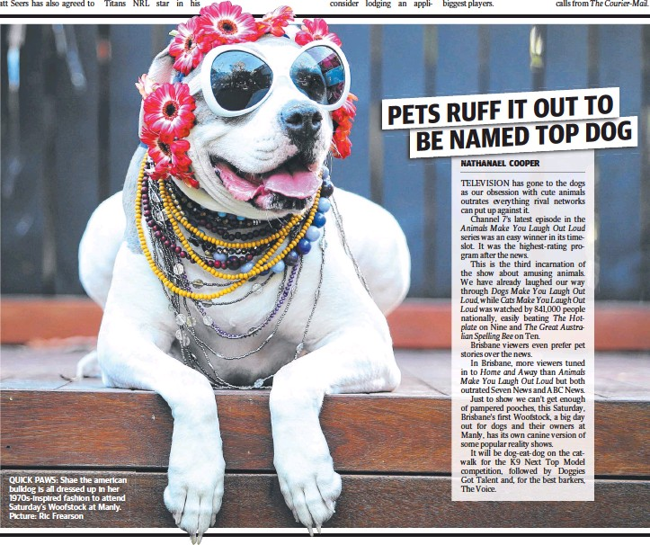 ?? Picture: Ric Frearson ?? QUICK PAWS: Shae the american bulldog is all dressed up in her 1970s-inspired fashion to attend Saturday's Woofstock at Manly.
