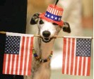 ?? AP FILE PHOTO ?? Flair the whippet looks ready for the Fourth of July, but not every dog enjoys the bombs bursting in air.