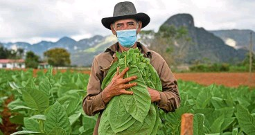 ?? — YAMIL LAGE/AFP ?? Hernandez, owner of a private restaurant and a tobacco cultivator, working in his land in Vinales, Cuba.