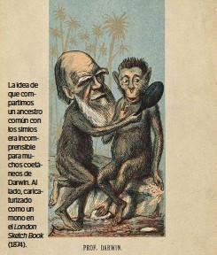 ??  ?? La idea de que compartimos un ancestro común con los simios era incomprensible para muchos coetáneos de Darwin. Al lado, caricaturizado como un mono en el London Sketch Book (1874).