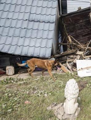 ??  ?? De Cel Vermiste Personen kreeg gisteren op de camping in Mery bijstand vanNederlandse collega's die met lijkhonden mee kwamen zoeken naar lichamen.