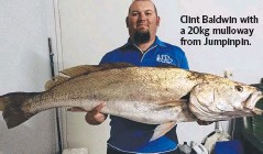 ??  ?? Clint Baldwin with a 20kg mulloway from Jumpinpin.