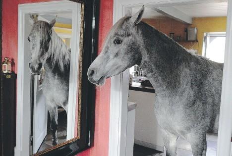 ?? [Getty] ?? Il cavallo allo specchio, un'immagine molto bella di Carsten Rehder