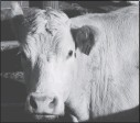 ?? File photo ?? AgriRecovery should be a help for livestock producers.